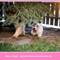 Glory-foto4