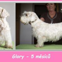 Glory-foto6